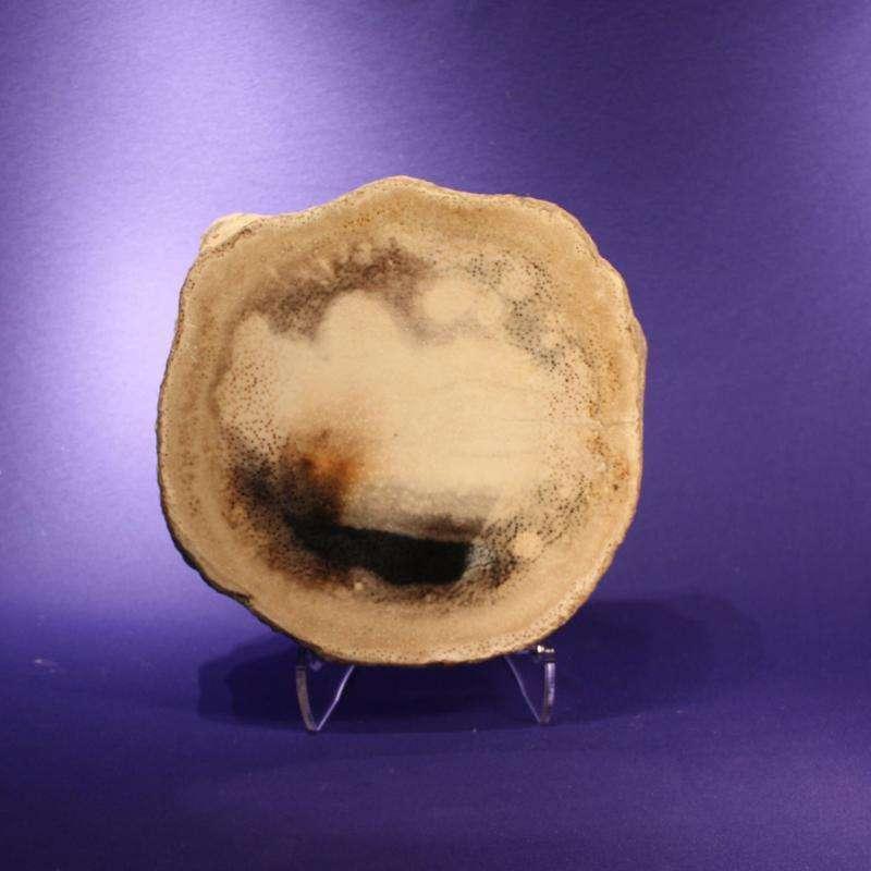 PETRIFIED PALM TREE - CUT AND POLISHED