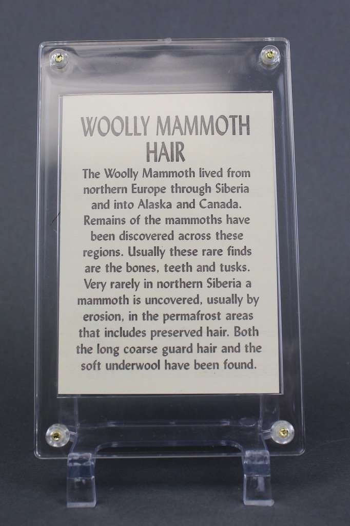 WOOLLY MAMMOTH HAIR FROM SIBERIA