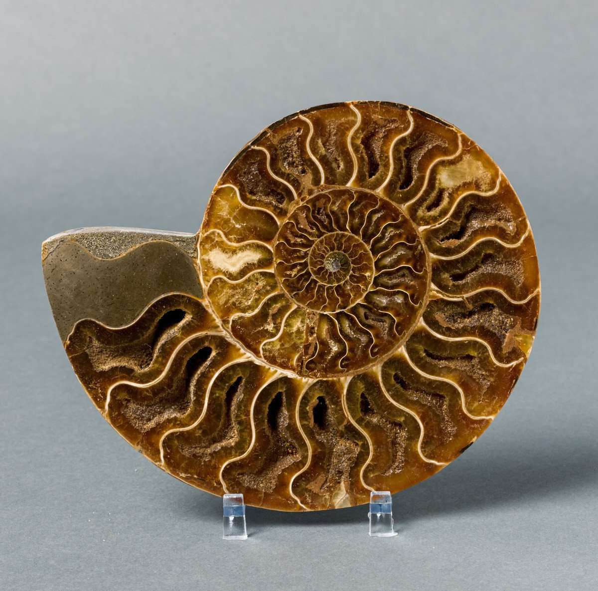 GORGEOUS SLICED AMMONITE FROM MADAGASCAR