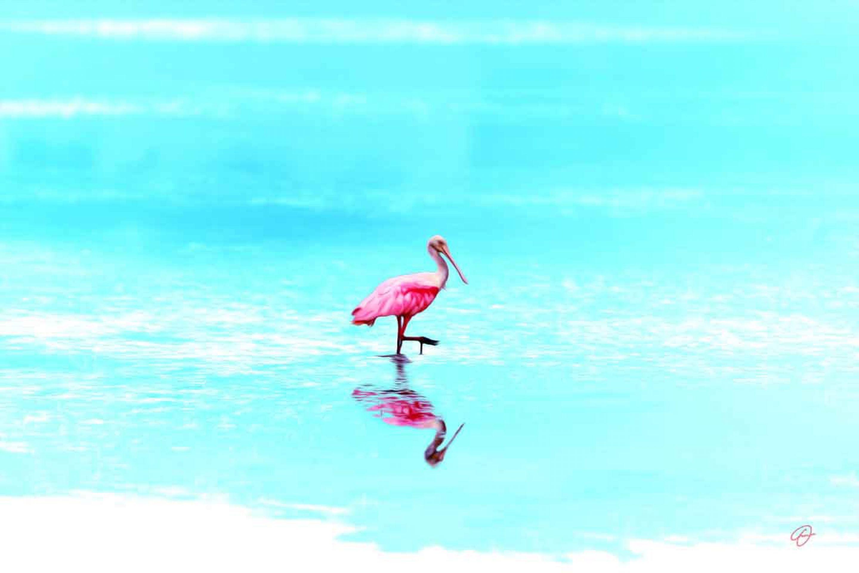 Fabio Dal Boni (Pink Beauty, inch60x40)