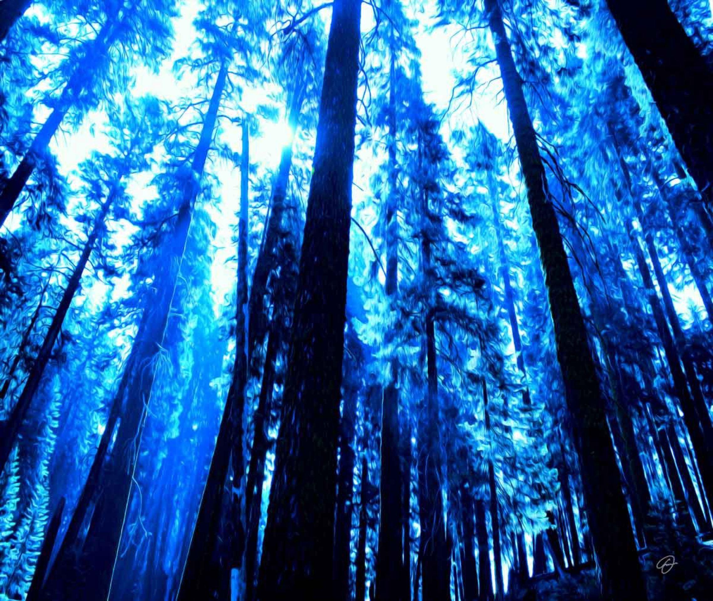 Fabio Dal Boni (Enchanted Forest, inch60x40)