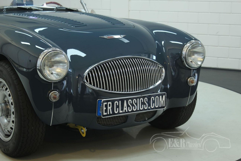 AUSTIN HEALEY 100-4 BN1 1955