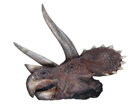 Triceratops head (Jurassic park movie)