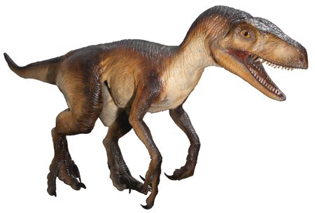 Velociraptor (Jurassic Park movie)