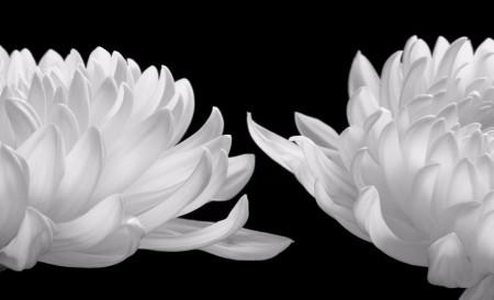Talking Zen, Photograph, HIROYUKI ARAKAWA