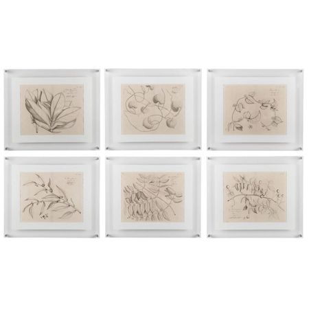 Six Antique Prints of Asian Flora